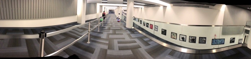 Empty Dulles Airport corridor during COVID-19 pandemic, August 2020
